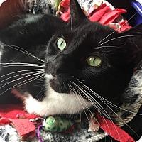 Adopt A Pet :: Dudley - Voorhees, NJ