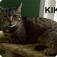 Adopt A Pet :: Kiki - Medway, MA