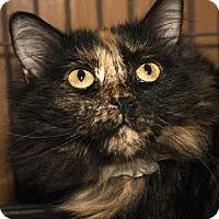 Adopt A Pet :: Lalasa - Grand Ledge, MI