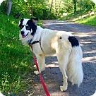 Adopt A Pet :: Linus