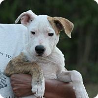 Adopt A Pet :: Bernadette - Salem, MA