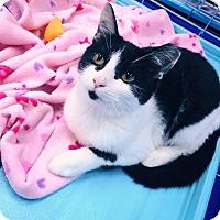 Adopt A Pet :: Daisy - Mansfield, TX