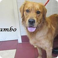 Adopt A Pet :: Rambo - Bartonsville, PA