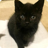 Adopt A Pet :: Valerie - Westwood, NJ