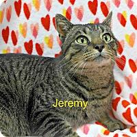 Adopt A Pet :: Jeremy - Spring Brook, NY