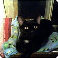 Adopt A Pet :: Marsha - Portland, ME