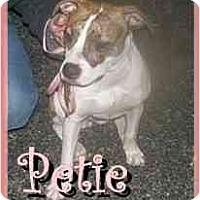 Adopt A Pet :: Wiggles - Raymond, NH