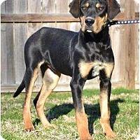 Adopt A Pet :: *Atticus - PENDING - Westport, CT