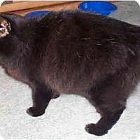 Adopt A Pet :: Anika - Davis, CA