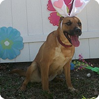 Adopt A Pet :: Duchess - Palmetto Bay, FL