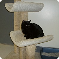 Adopt A Pet :: Katrina - Milwaukee, WI