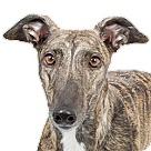 Adopt A Pet :: Cloey