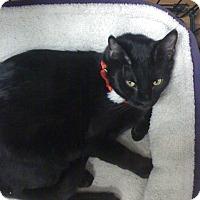 Adopt A Pet :: Jager - River Edge, NJ