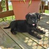 Adopt A Pet :: Espresso - Marlton, NJ