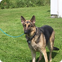 Adopt A Pet :: LILLY - Tully, NY