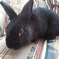 Adopt A Pet :: Sylvester - Watauga, TX