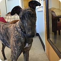 Adopt A Pet :: Alex - Swanzey, NH