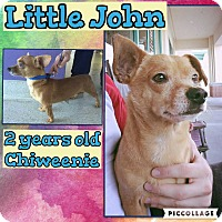 Adopt A Pet :: Little John - Scottsdale, AZ