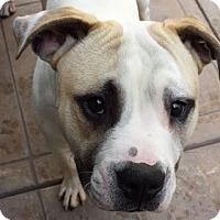 Adopt A Pet :: Bruno - Pleasant Hill, CA