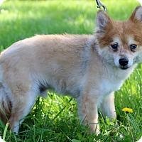 Adopt A Pet :: Honda - Waldorf, MD