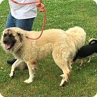 Adopt A Pet :: TEXAS, TYLER; 'BENJAMIN' - Little, Rock, AR