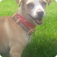 Adopt A Pet :: PEANT - New Windsor, NY