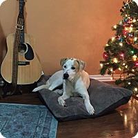 Adopt A Pet :: Scout - oklahoma city, OK