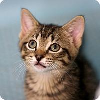 Adopt A Pet :: Aramis - Troy, MI