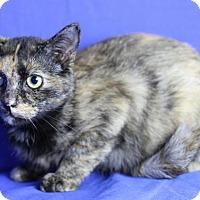 Adopt A Pet :: Zinnia - Winston-Salem, NC
