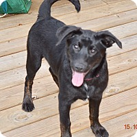 Adopt A Pet :: Buddy - Haggerstown, MD