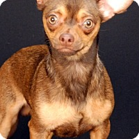 Adopt A Pet :: Peanut - Newland, NC