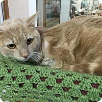 Adopt A Pet :: Nicholas - Harrisburg, PA