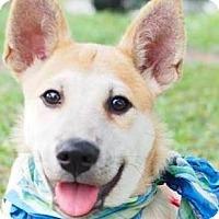 Adopt A Pet :: Rago - San Ramon, CA