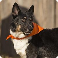 Adopt A Pet :: Radar - Manhattan, KS