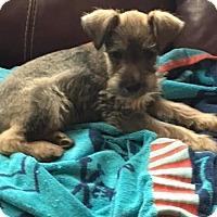 Adopt A Pet :: Buster - San Diego, CA