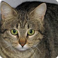 Adopt A Pet :: Alivia - Ruidoso, NM