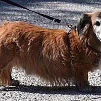 Adopt A Pet :: Traylor - Humble, TX
