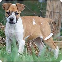 Adopt A Pet :: Olivia - Providence, RI