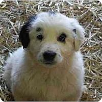 Adopt A Pet :: Chablis - Staunton, VA