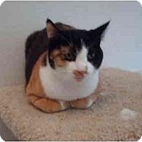Adopt A Pet :: Kim - El Cajon, CA
