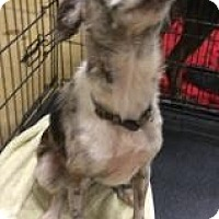 Adopt A Pet :: Abby - Gainesville, FL