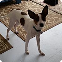 Adopt A Pet :: Stuart - Norwalk, CT