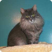 Adopt A Pet :: Mae - Dover, OH
