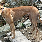Adopt A Pet :: Kathy Lee