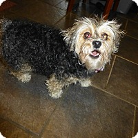 Adopt A Pet :: Snickers - Wyanet, IL