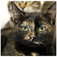 Adopt A Pet :: Sprinkles - Forked River, NJ