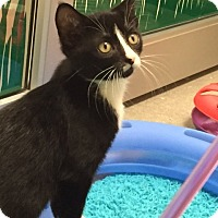 Adopt A Pet :: Chuck - Deerfield Beach, FL