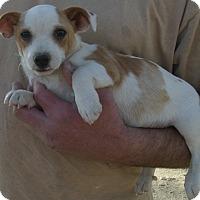 Adopt A Pet :: CHIP - Corona, CA