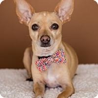 Adopt A Pet :: Emmitt - Mesa, AZ