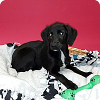 Adopt A Pet :: Carmen - Decatur, AL